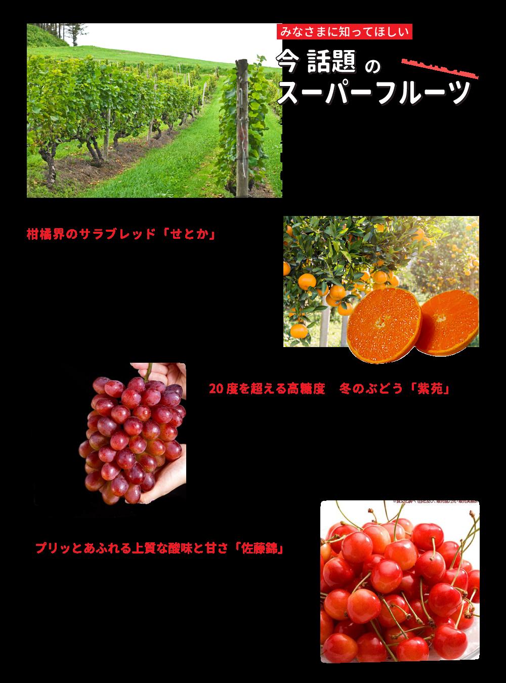 今話題のスーパーフルーツ