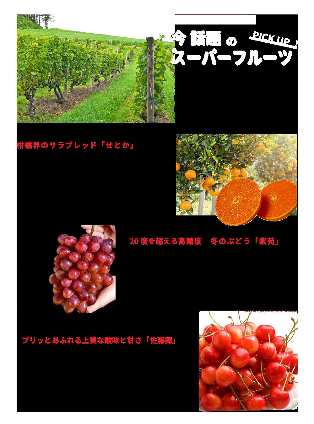 12ヶ月のラインナップの中には、はじめて見るフルーツも多いと思います。