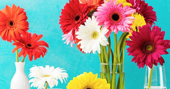 鮮やかな花々